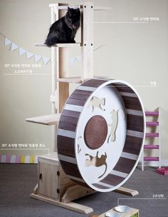 Nabinamu Cat Wheel