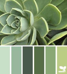 Succulent Tones - http://design-seeds.com/index.php/home/entry/succulent-tones9