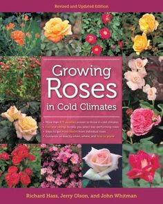 Looking for help growing roses in our sometimes inhospitable Wisconsin climate? Here are profiles of twelve major classes of roses which include plants that are disease resistant or fully hardy without winter protection. Traditional and newer methods for winter protection are discussed: such as tipping and burying the plant