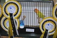 Best in Show - Opaline Orangefaced Roseicollis - The Lovebird Society UK - Bird owned by Andy Morton, photo courtesy Allen King Allen King, Bird Poster, Opaline, Nature Wallpaper, Exotic Pets, Love Birds, Pet Birds, Animals And Pets, Arabic Sweets