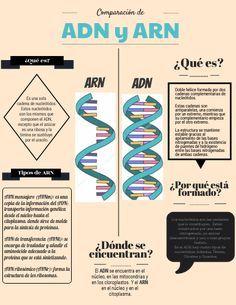 Infografía comparando ADN y ARN. Chemistry Lessons, Biology Lessons, Science Biology, Science Education, Medicine Notes, Medicine Student, Clinical Chemistry, Studying Medicine, School Information