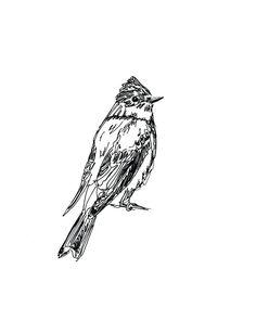 western wood-pewee (pronounced pee-wee!) - ink drawing #bird #art #drawing #sketch #flycatcher #songbird