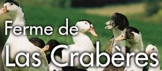 L'Isle Jourdain, le Gers, entre Toulouse et Auch, les portes de la Gascogne, sur un de ces premiers coteaux: La Ferme de Las Crabères. En tant que producteur à la ferme, c'est là que depuis plusieurs générations ils élevent les canards, les engraissent et les cuisinent pour le plus grand ravissement de vos papilles.