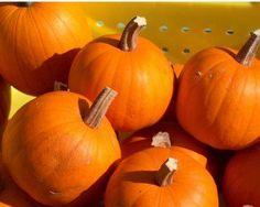 Make your own pumpki...