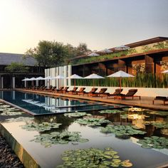 Lovely pool view at The Chedi Chiang Mai