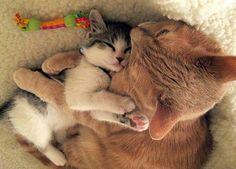 Mommy cat hugging her kitten.