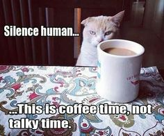 silence human--coffee before talkie. #cats