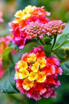 Lantana is a great perennial. Full sun. It attracts small butterfly's and rare to see bees.