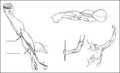 мышцы рук героя комиксов, битцепс, трицепс, плечевая мыщца, трехглавая мышца, локтевая мышца.