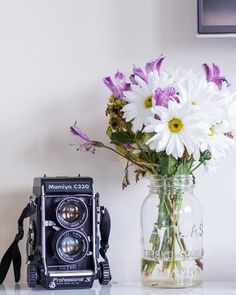 The Most Beautiful Winter Flowers for Your Home   Apartment Therapy