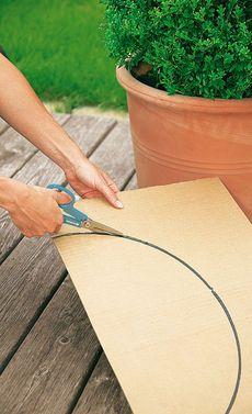 Buchsbaum schneiden: Schritt 2 von 4