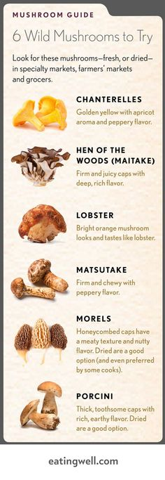 Our favorite wild mushrooms plus recipes.You can find Mushroom hunting and more on our website.Our favorite wild mushrooms plus recipes. Edible Wild Mushrooms, Growing Mushrooms, Stuffed Mushrooms, How To Grow Mushrooms, Culture Champignon, Mushroom Guide, Mushroom Fungi, Chanterelle Mushroom Recipes, Cooking Recipes