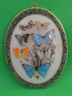 7 BUTTERFLY COLLECTION SEMI PRECIOUS STONE FRAME BRAZIL Largest Butterfly, Butterfly Wings, Jewelry Art, Thrifting, Brazil, Decorative Plates, Stone, Frame, Crafts