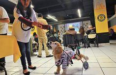 Ciudad de México: Proponen incluir la protección de los animales en la nueva constitución - http://verdenoticias.org/index.php/component/content/article/34-noticias/animales/276-ciudad-de-mexico-proponen-incluir-la-proteccion-de-los-animales-en-la-nueva-constitucion?Itemid=101