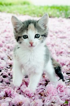 Flower Girl by Leah Fauller on Flickr -- For kitty lover gift ideas on kittylovergifts.com