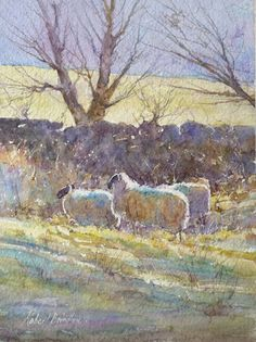 """""""Sheep, North Yorkshire Moors"""" by Robert Brindley, British Artist who works in Oils, Watercolours, Acrylic & Pastels . Watercolor Trees, Watercolor Sketch, Watercolor Animals, Watercolor Landscape, Landscape Art, Watercolor Paintings, Pastel Paintings, Watercolor Painting Techniques, Gouache Painting"""