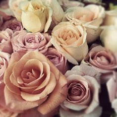 Love roses, it's all in the name....
