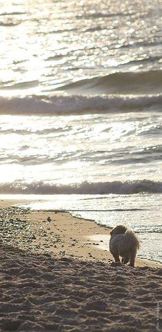 Die vierbeinigen Lieblinge gehen auch gerne am Strand spazieren ... Hunde und andere Haustiere in den Ferienwohnungen auf Anfrage. Community, Beach, Water, Travel, Outdoor, Pets, Pet Dogs, Gripe Water, Outdoors