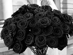 Gambar Bunga Mawar Hitam Begitu Cantik