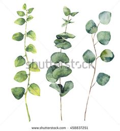 Watercolor eucalyptus round leaves and twig floral branches. Hand painted baby and silver dollar eucalyptus, twig herb elements isolated on white background. For design, textile and background.