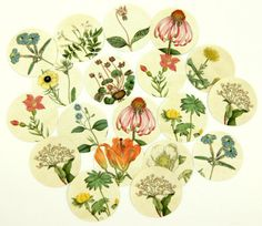 Envelope Seals Stickers Wildflowers SES89 on Etsy, $11.00
