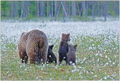 Finland Bärenland [61] - Wiesenkindergarten von Annette He