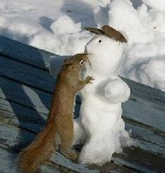 Snowman kissed by squirrel (probably stealing his carrot!) :-) SO CUTE Frosty The Snowmen, Cute Snowman, Christmas Snowman, Snowman Jokes, Snowmen Pictures, Animal Pictures, Hamsters, Rodents, Funny Animals