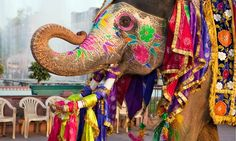 11 Day India Holi Festival of Colors & Elephant Festival Tour in ...
