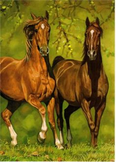 Western Art Horses New Blank Note Card Matching Envelope