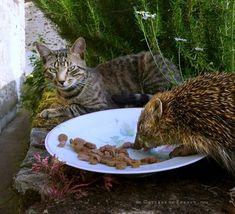 Un ami à dîner Cottage Chic, A Hedgehog, Parcs, France, Dinner, Limousin, Happy, Green, Animals