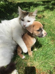 We were worried about how the cat would react to a new puppy. Consider our worries alleviated - Imgur