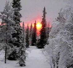 Winter sunset                                                                                                                                                     More