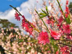 The Spring Walk - Royal Botanic Gardens - Sydney