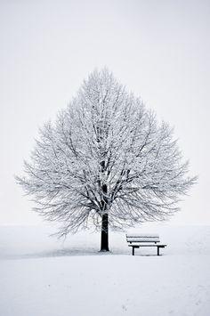 "Photo ""The White Tree"" by Benson Kua Snow Photography, Amazing Photography, Landscape Photography, Winter Scenery, Snow Scenes, Winter Beauty, Winter Pictures, Winter Landscape, Beautiful Landscapes"