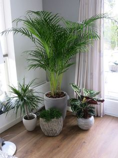 Begin is er, planten in m& kamer. Living Room Plants, House Plants Decor, Living Room Decor, Indoor Garden, Indoor Plants, Bamboo Garden, Patio Plants, Plantas Indoor, Decoration Plante