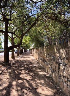 A cool avenue of trees along a long stone fence at Burra, SA.  #TopWireTraveller #SeeAustralia #SouthAustralia #Burra
