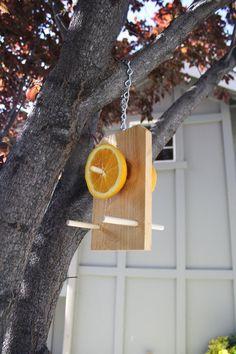 Oriole whole orange bird feeder