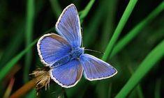 British farmland butterflies bounce back after 2013 summer, survey finds   Environment   The Guardian