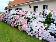 Best Garden Decorations Tips and Tricks You Need to Know - Modern Hydrangea Landscaping, Hydrangea Garden, Front Yard Landscaping, Hydrangeas, Outdoor Plants, Garden Plants, Plantas Bonsai, Flower Aesthetic, Garden Care