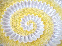 daisy spiral | Flickr - Photo Sharing!