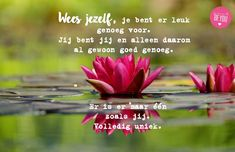 Free Image on Pixabay - Water Lily, Flower, Blossom, Bloom Bloom Blossom, Blossom Flower, Psalm 119 11, Lily Wallpaper, Wallpaper Desktop, Happiness Project, Organic Gardening Tips, Landscaping Tips, Free Images