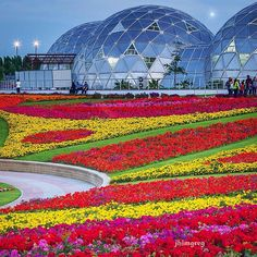 Fascinating Picture Of Dubai Miracle Garden Dubai Miracle Garden is one of most famous and visited gardens in Dubai , all type of flowers and flowers smell enhance garden beauty, one of best… Big Garden, Love Garden, Garden Soil, Water Garden, Garden Art, Dubai Islands, Dubai Miracle Garden, Transformers, Underwater Hotel