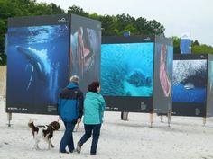 Fotofestival Horizonte 2013 in Zingst | Giganten der Meere am Strand von Zingst (c) Frank Koebsch (6)