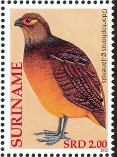Marbled Wood Quail stamps - mainly images - gallery format