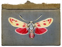 Fascinated with the distressed textures of peeling wallpaper and decaying surfaces, it seemed like a natural leap for Bristol-based artist Rose Sanderson when she began painting various insects on ...