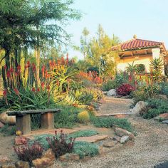 Patrick Anderson's succulent garden in Fallbrook, CA