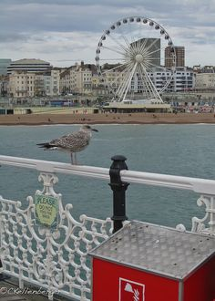Brighton Pier, Brighton, UK.. Growing up in Christchurch, Canterbury, NZ we have a lot of English names around the city - including New Brighton.  I have visited Chriscthurch, UK, about to visit Canterbury, UK and I am adding Brighton to the list to make a hat trick