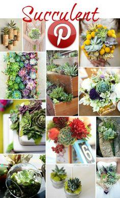 Boho Pins – Succulent