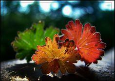 Seasons of Nature by EMERALD WAKE, via 500px