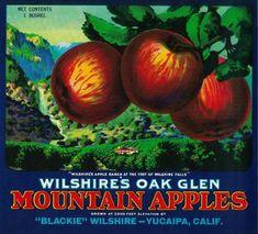 Wilshire's Oak Glen Apple Crate Label – Yucaipa, CA